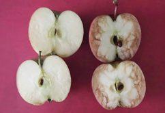 """Bài học """"quả táo thối"""" và cách giảm tiêu cực nơi công sở"""
